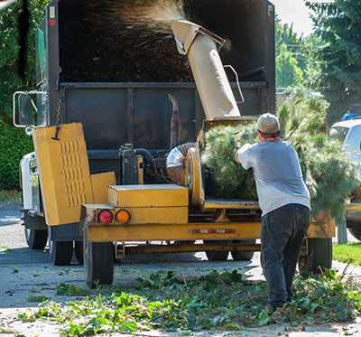 new braunfels tree service pros land clearing