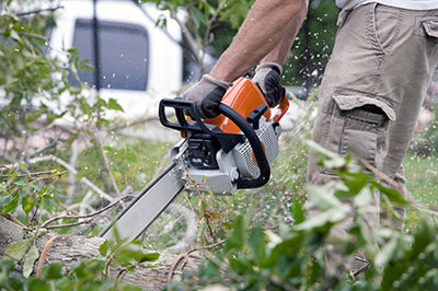 new braunfels tree service pros emergency tree service