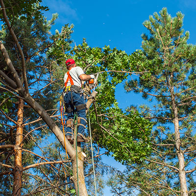 new braunfels tree service pros tree trimming