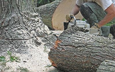 new braunfels tree service pros stump removal