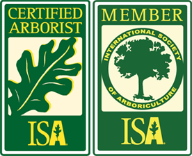 new braunfels texas certified arborist