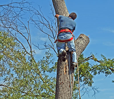 new braunfels best time to trim trees